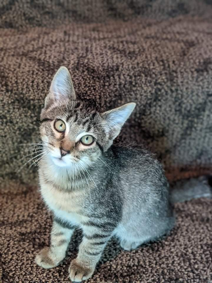 Mowgli 4