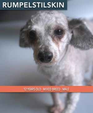 Rumpelstiltskin is a 12 year old male dog He was saved along with 20 other dog