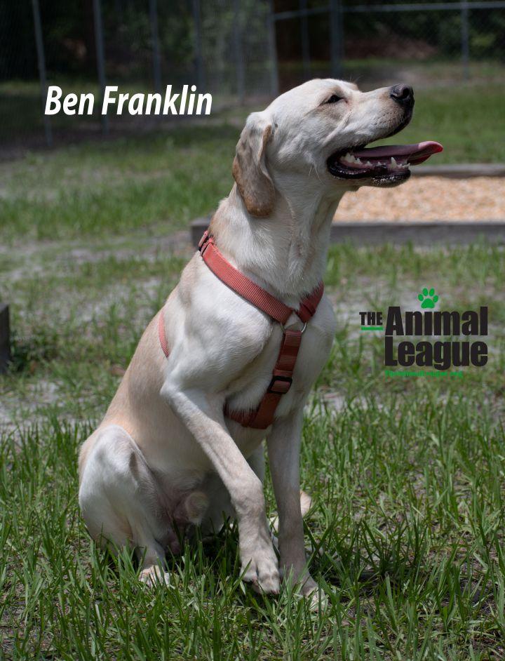 Ben Franklin 4