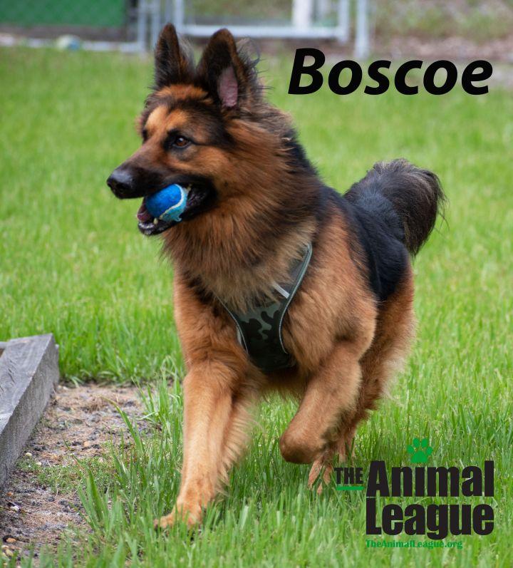 Boscoe 2