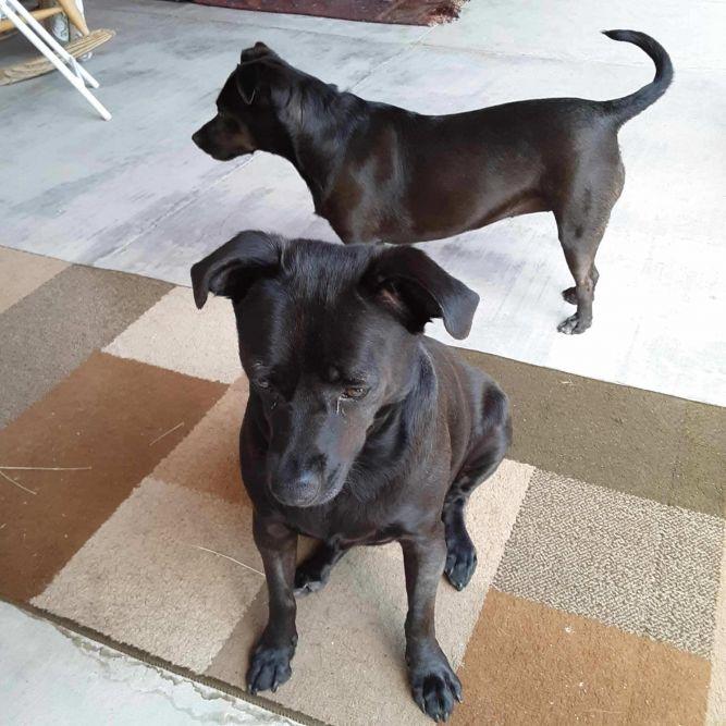 Roxy and Oriella