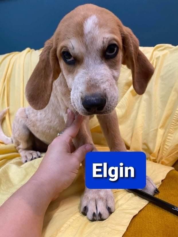 Elgin 1