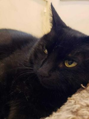 DOB 31519Spooky is a shy girl who can be very affectionate when she opens up