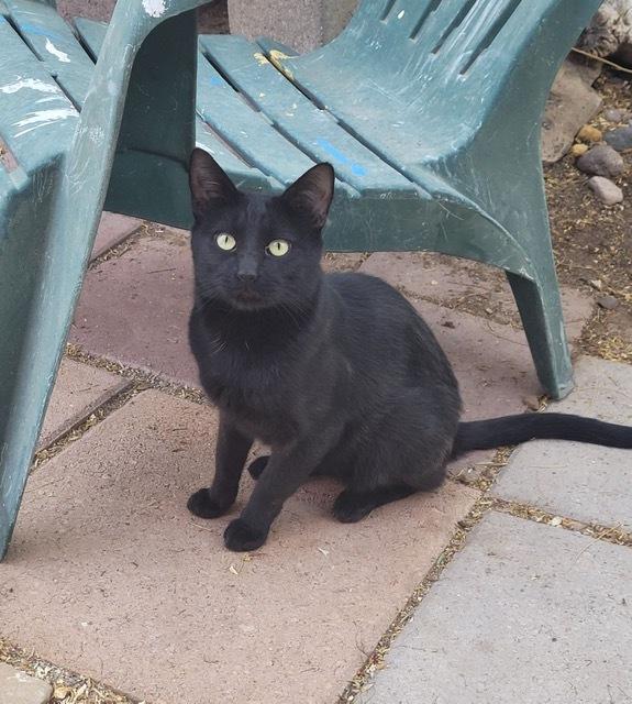Puddy Cat 1