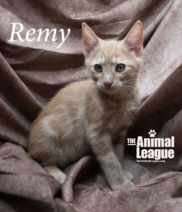 Remy 2