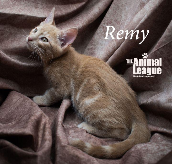 Remy 3