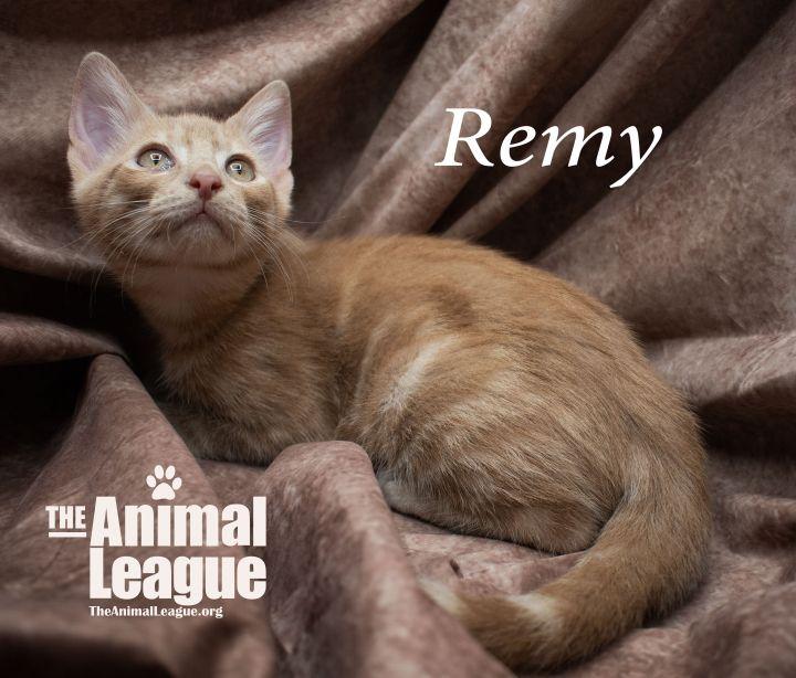 Remy 4