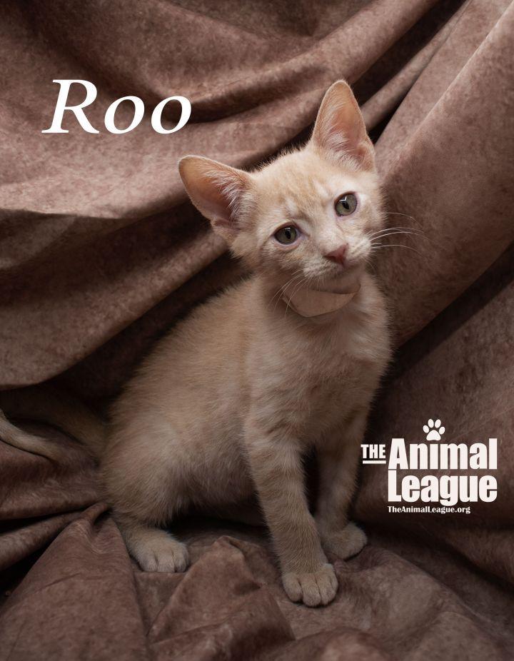 Roo 2