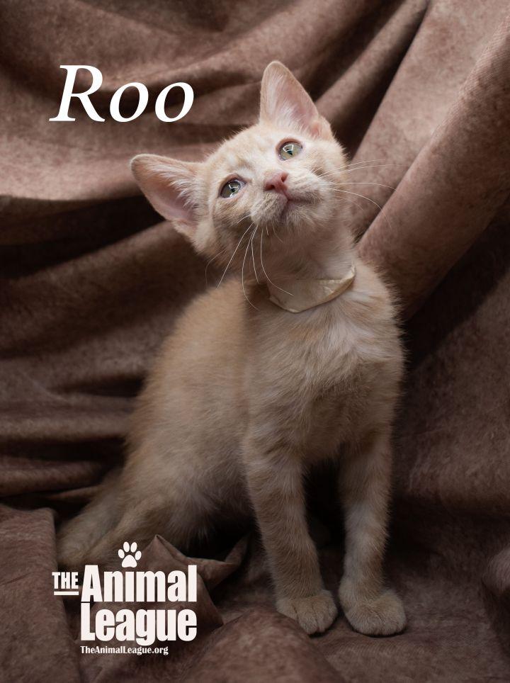 Roo 3