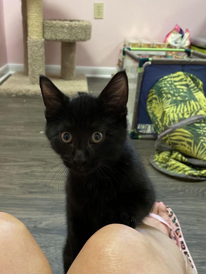 Rory (Gracie kittens) 2