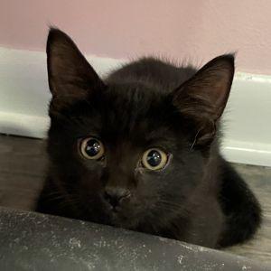 Rory (Gracie kittens)