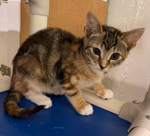 Mary (Orange kittens) 2
