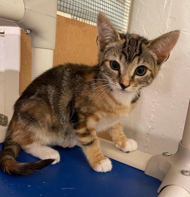 Mary (Orange kittens) 1