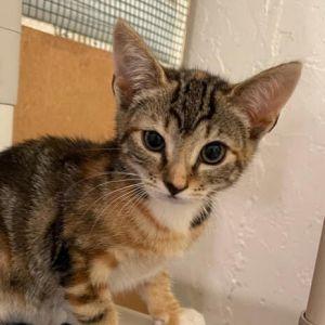 Mary (Orange kittens)