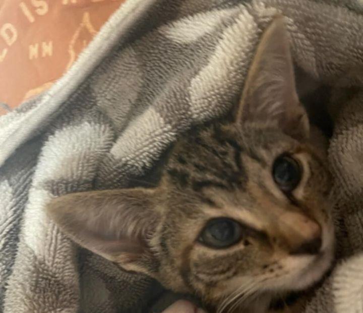 Mary (Orange kittens) 3