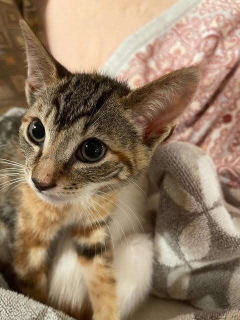 Mary (Orange kittens) 4