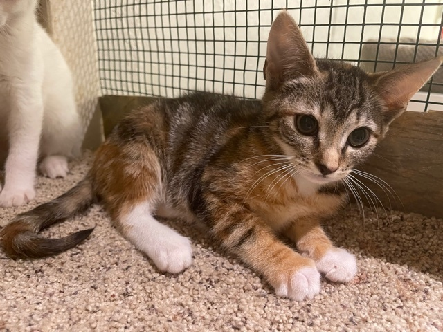 Mary (Orange kittens) 5