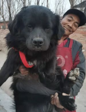 On July 11 2020 ZhuangZhuang was found as a stray on the streets with a bunch of other dogs Thank