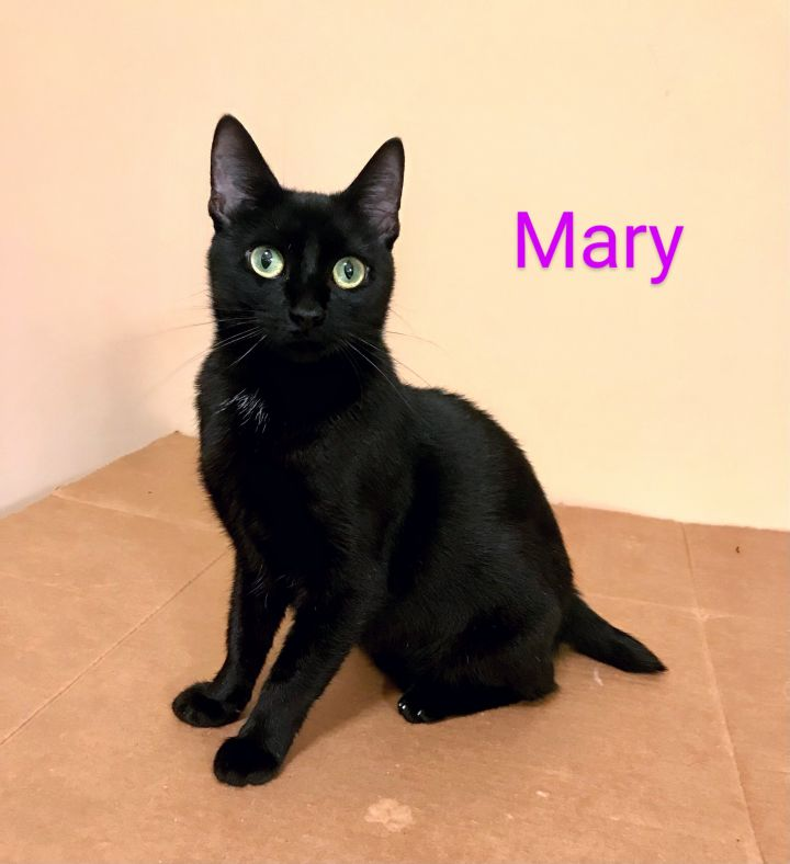 Mary - something about Mary! 2