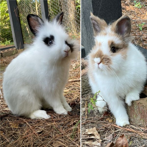 Photo of Blueberry and Marshmallow