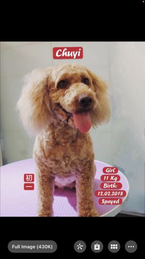 Chuyi was found chasing cars outside of a military camp in China Luckily a rescue group was notifi