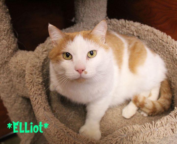 Elliot 2