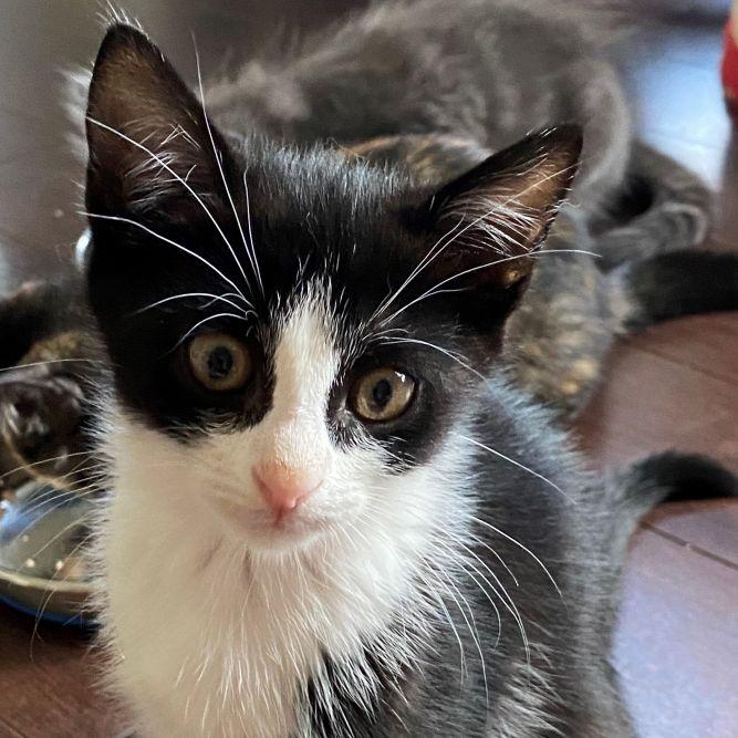 Princess Precious (Morris litter)