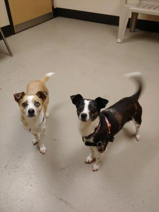 Lulu and Buddy 1