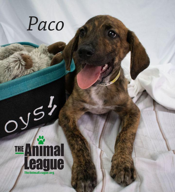Paco 2