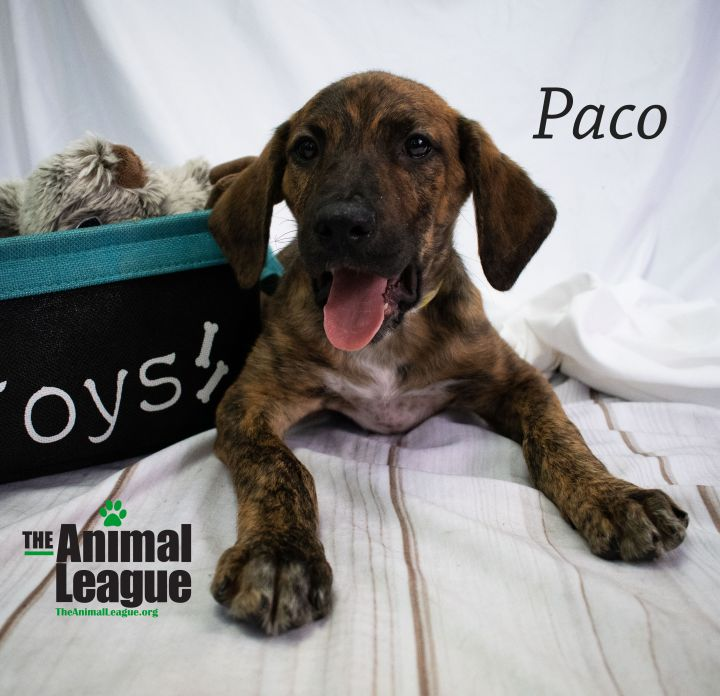 Paco 3