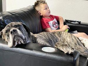 Hi Im GI JOE Pleasure to meet you Im a 135 lb 9 year old Mastiff Big Boy Long legs