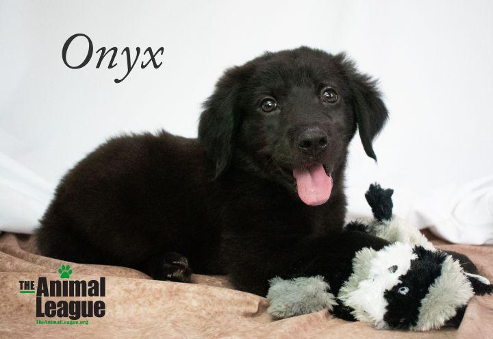 Onyx 1
