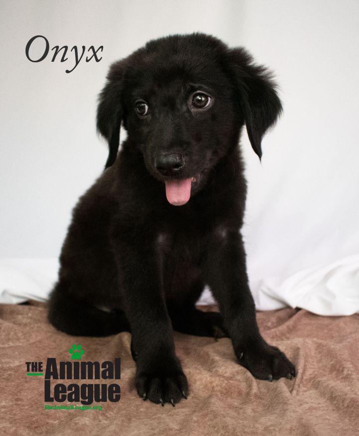 Onyx 2