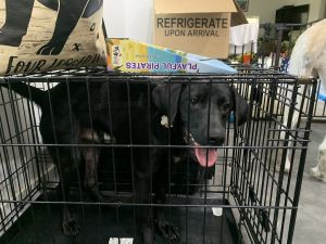DIRECT LINK TO OUR APPLICATION AVAILABLE ON OUR PETFINDER RESCUE PAGE OR CUTPASTE THIS LINK tramp