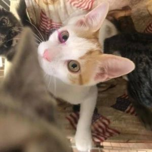 We are sweet little kitties who have been raised in a foster home so we are very