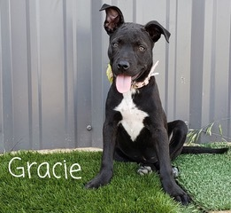 Meet adorable young Gracie As of July 1 she is 4 months old and adorable She likes other dogs and