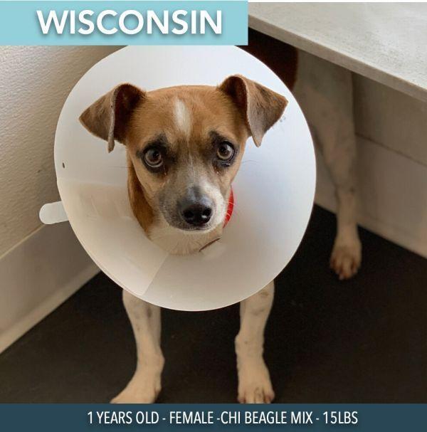 Wisconsin 3
