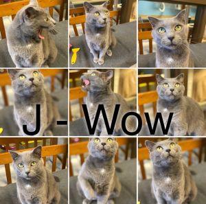 J WOW