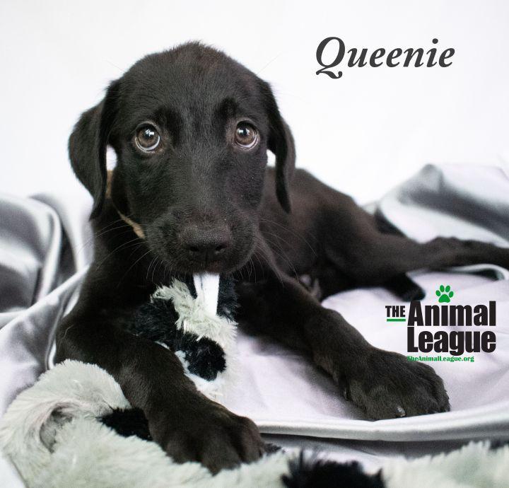 Queenie 3