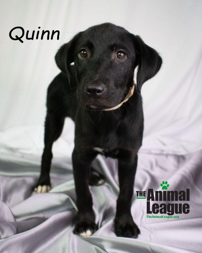 Quinn