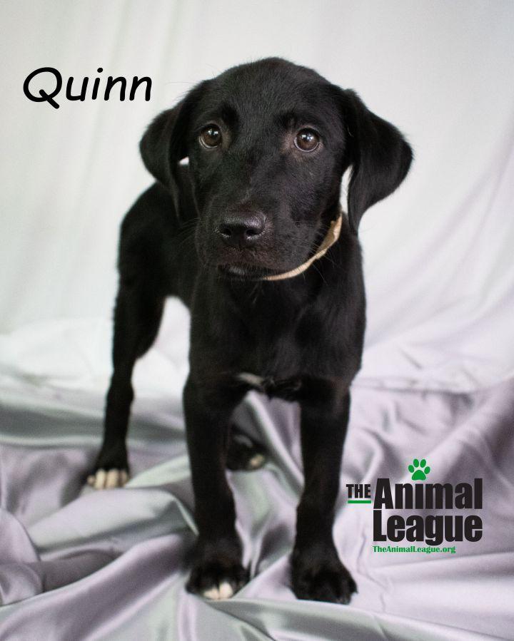 Quinn 1