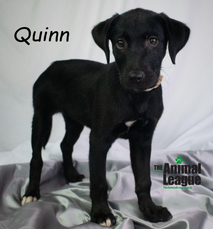 Quinn 4