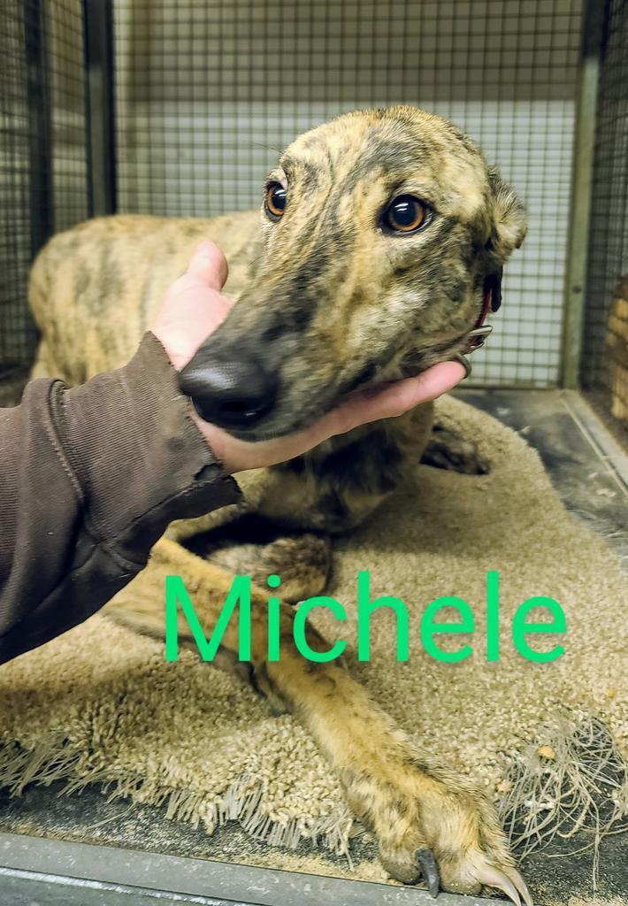 Michele 1