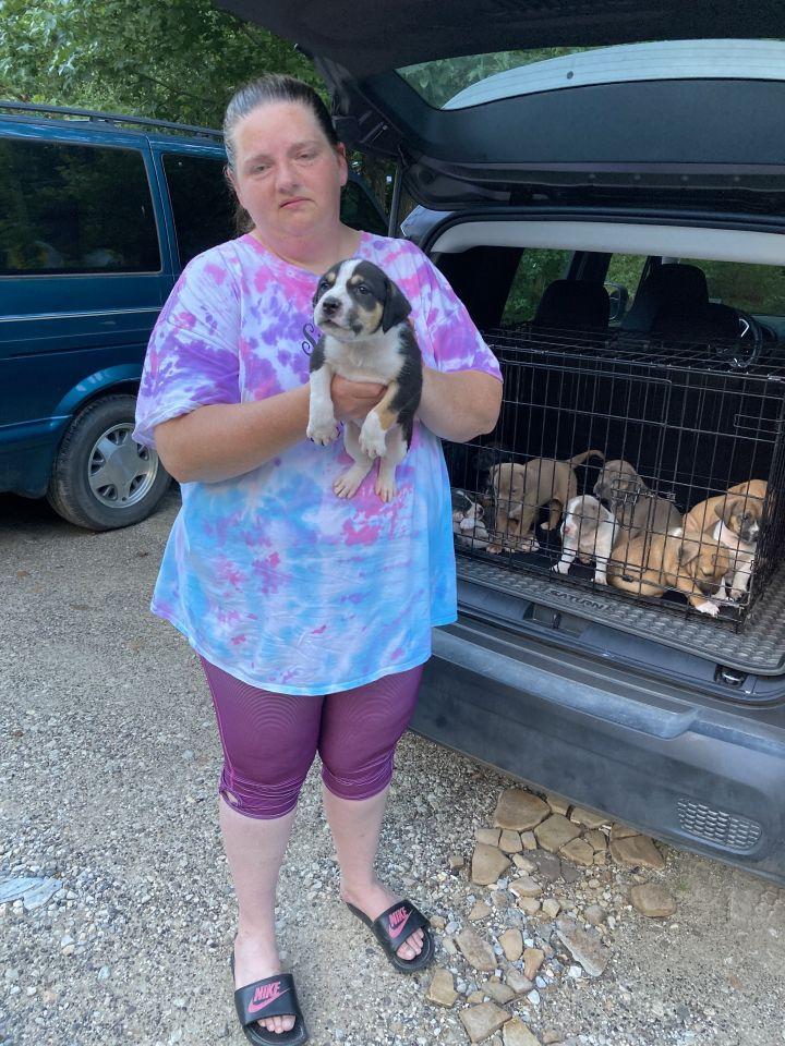 Litter of 6 pups needs a foster home 2