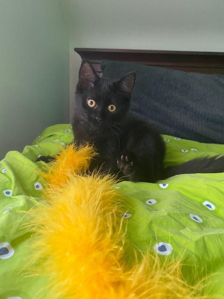 Fluffy (Tow kittens) 2