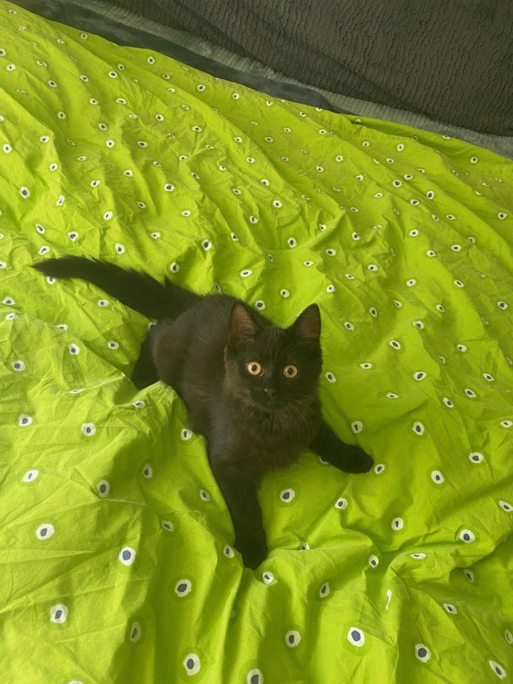 Fluffy (Tow kittens) 4
