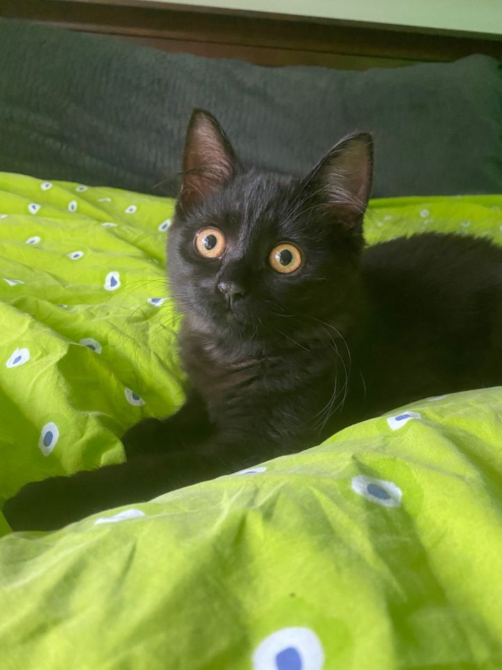 Fluffy (Tow kittens) 1