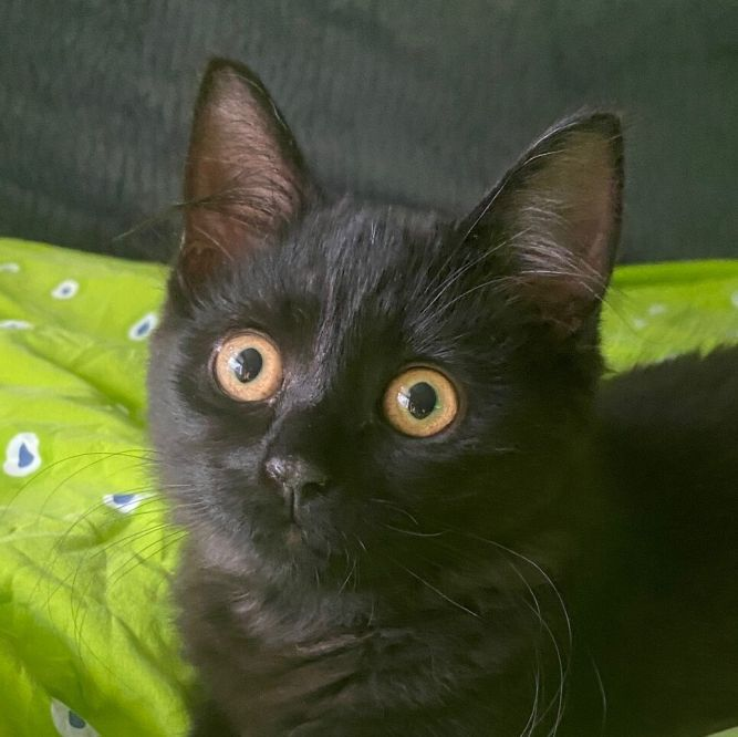Fluffy (Tow kittens)