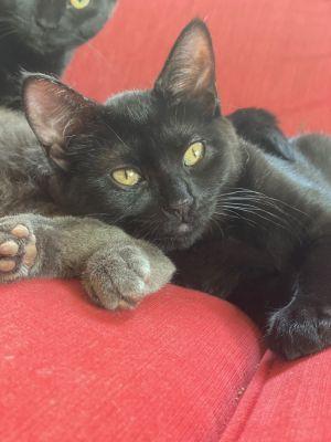 Tiny (Tow kittens)