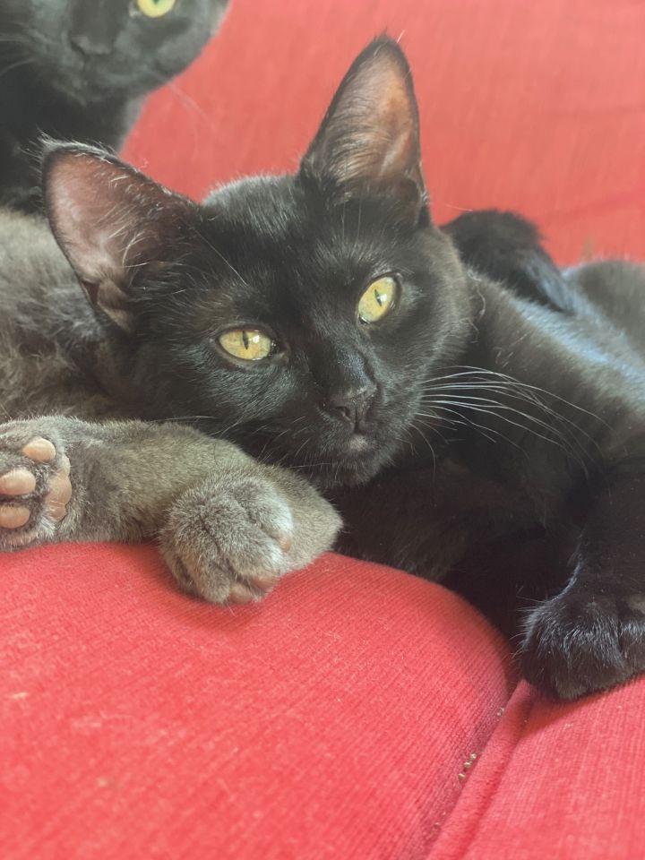 Tiny (Tow kittens) 1